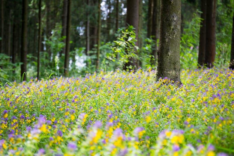 Lös blomma och gräs i skogen arkivfoton