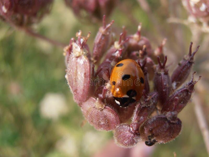 Lös dam Bird Bug royaltyfri fotografi