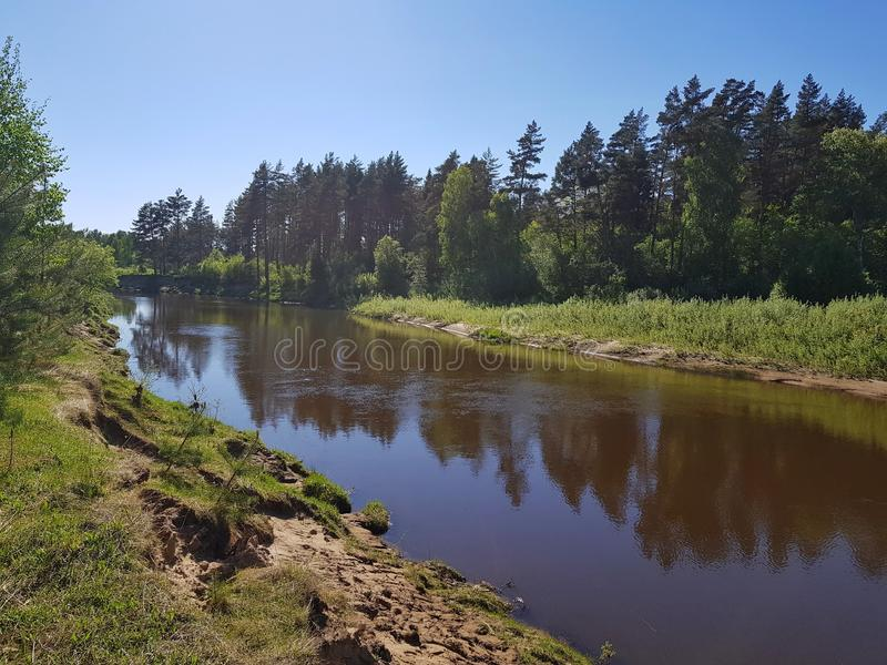 L?s flod i pineryskogen p? v?ren H?rlig naturdet friaplats royaltyfri bild