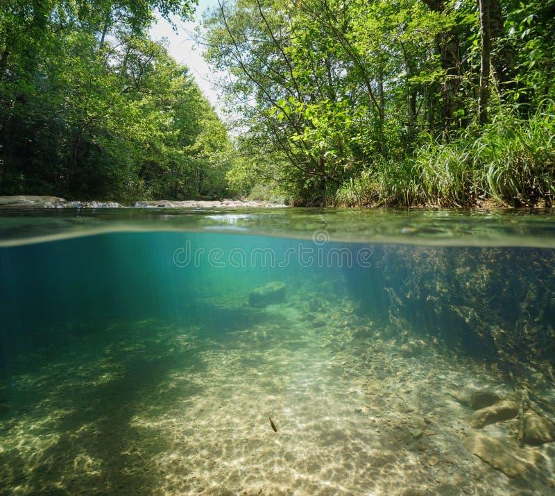 Lös flod med grön vegetation över under vatten royaltyfri foto