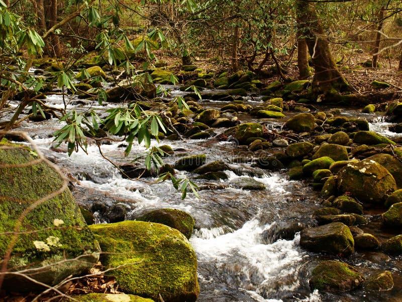 Lös flod som flödar till och med Smokeysen, TN arkivbild