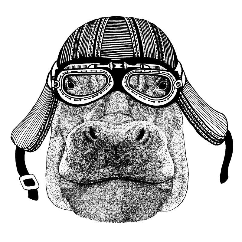 Lös flodhäst, flodhäst, vidunder, hjälm för motorcykel för flod-häst cyklistdjur bärande Utdragen bild f?r hand f?r tatuering stock illustrationer