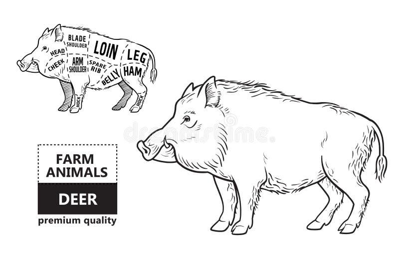 Lös gödsvin, intrig för diagram för snitt för modigt kött för galt - beståndsdeluppsättning på den svart tavlan vektor illustrationer