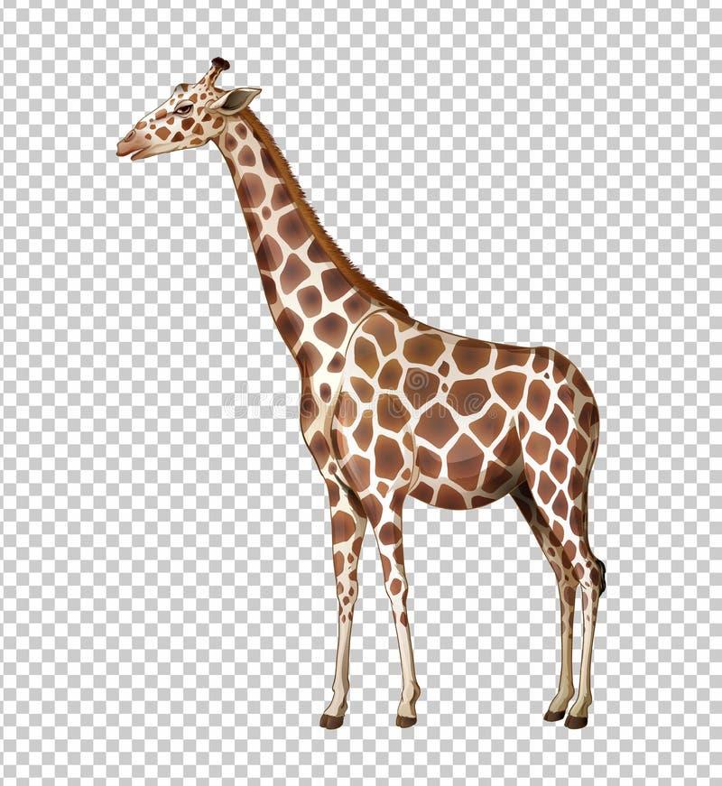 Lös giraff på genomskinlig bakgrund royaltyfri illustrationer
