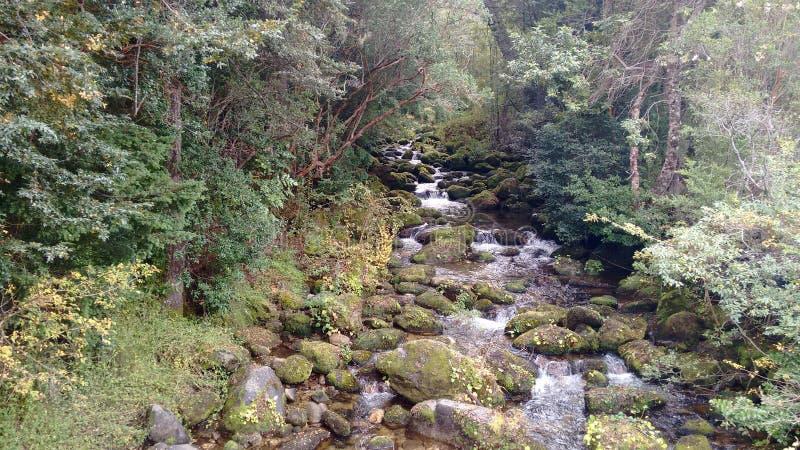 Lös grön skog royaltyfri bild