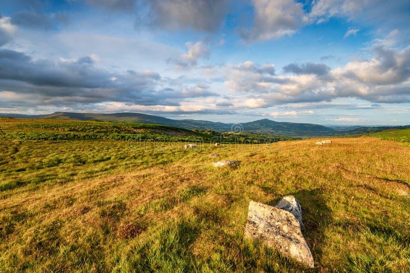 Lös hedland nära Llangattock i de Brecon fyrarna arkivbilder