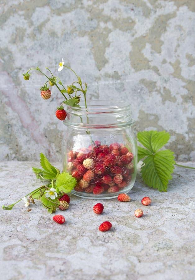 Lös jordgubbe i exponeringsglaset arkivfoton