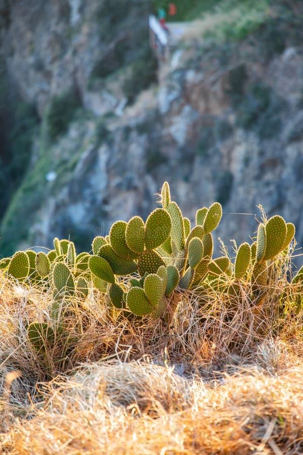 Lös kaktussikt med suddig bakgrund under solnedgång royaltyfri foto