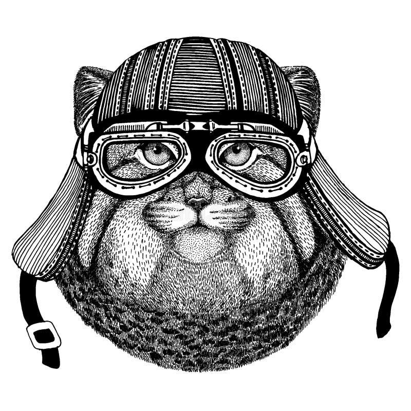 Lös katt, för löst hjälm för motorcykel cyklistdjur för manul bärande r vektor illustrationer