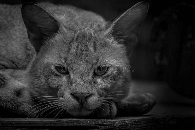 Lös katt inom bur med den ledsna framsidan som missa dess familj och freedo arkivbild