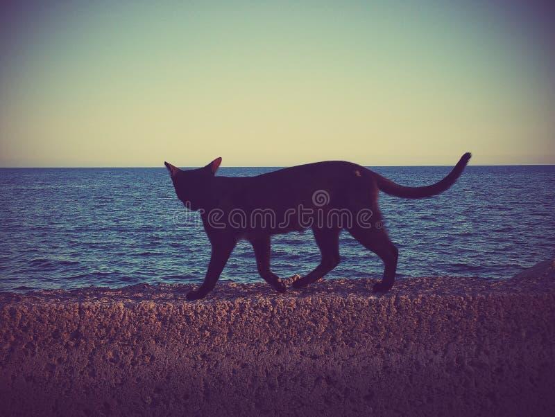 Lös katt som promenerar väggen på havet arkivbilder