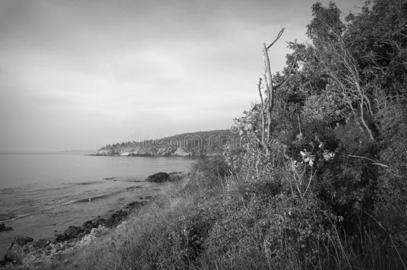 Lös kustsvart- & vitsikt royaltyfri foto