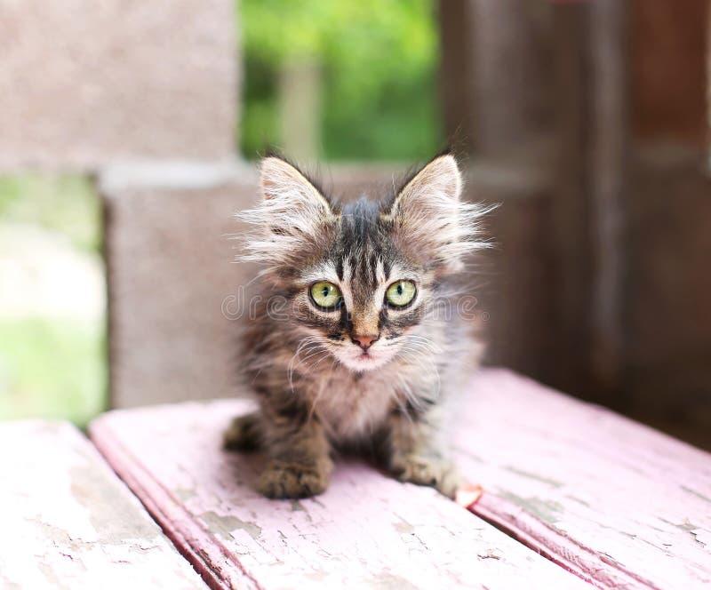Lös liten kattunge som huka sig ned på bänken royaltyfria bilder