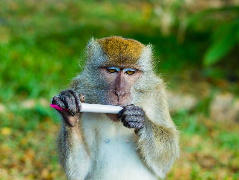 Lös Macaqueapa mot en naturlig bakgrund royaltyfri foto