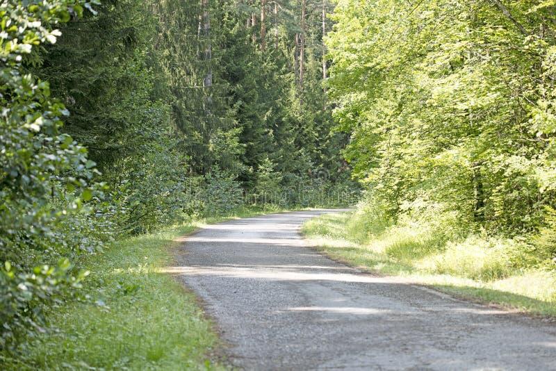 Lös norr tysk konst för skogAbsberg bakgrund i högkvalitativa tryckprodukter femtio megapixels arkivbilder