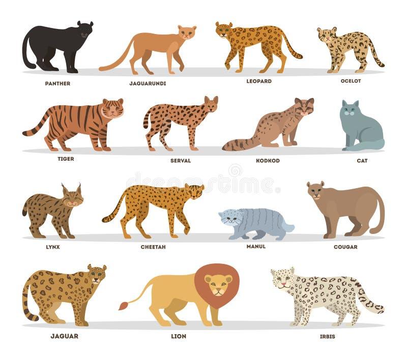 Lös och dometic kattuppsättning Samling av kattfamiljen stock illustrationer