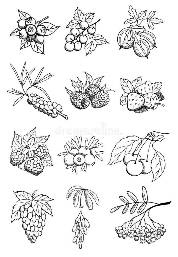 Lös och trädgårds- bäruppsättning royaltyfri illustrationer