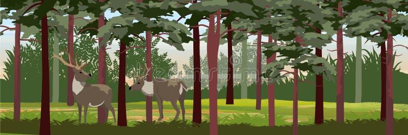 Lös ren för familj i pinjeskogen royaltyfri illustrationer