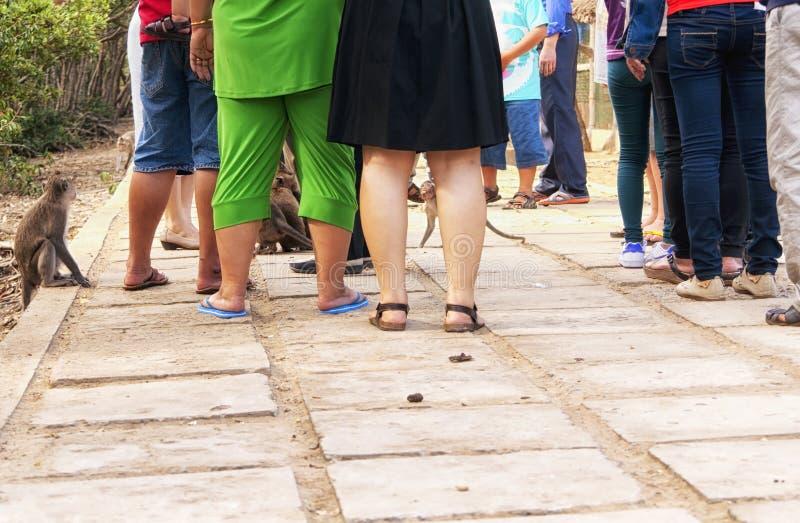 Lös rhesusapa härmar Vietnam royaltyfria bilder