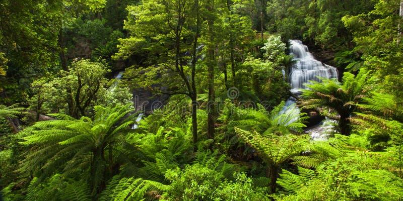 Lös skog fotografering för bildbyråer