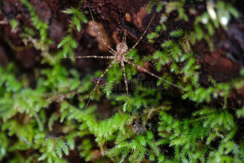lös spindel i dess skoglivsmiljö royaltyfri bild