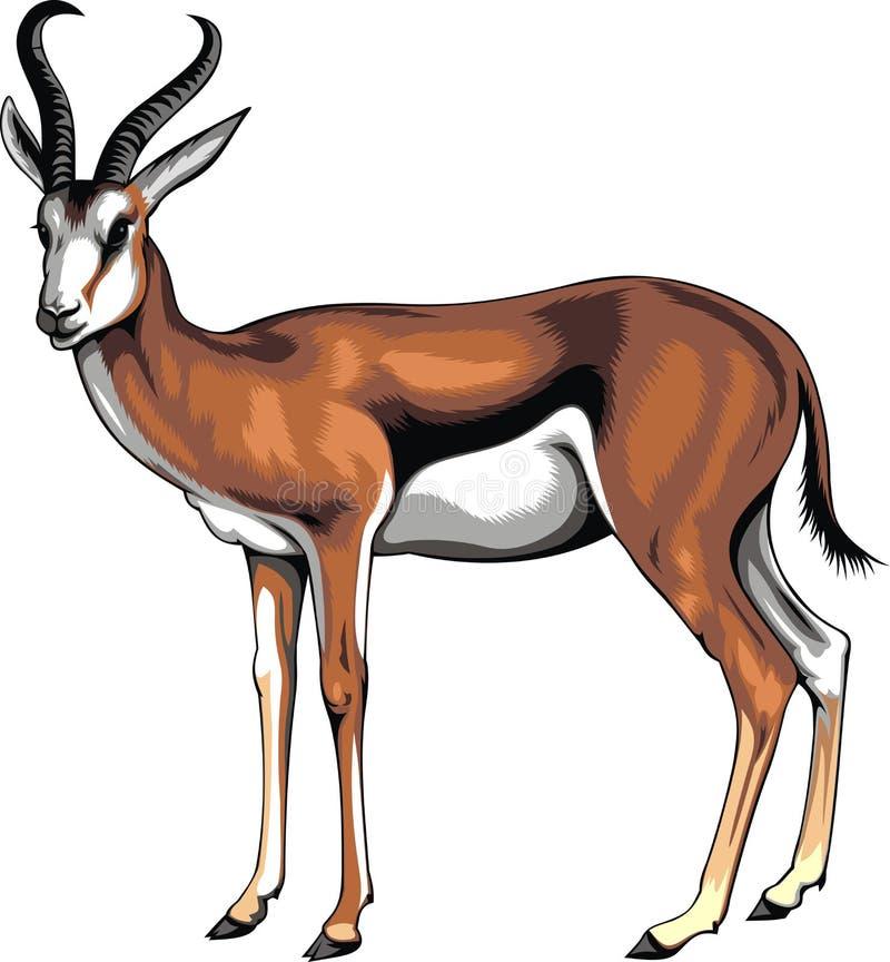 Lös ung antilop vektor illustrationer