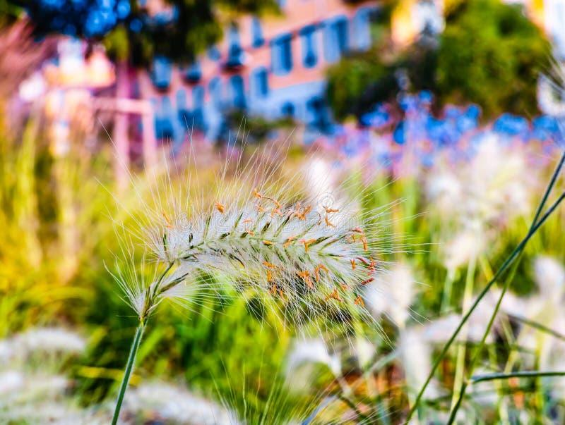Lös växt för sommar royaltyfri foto