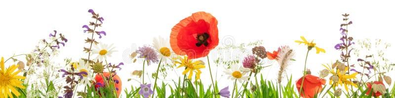 Lösa örter och blommor framme av vit bakgrund, titelrad royaltyfri bild