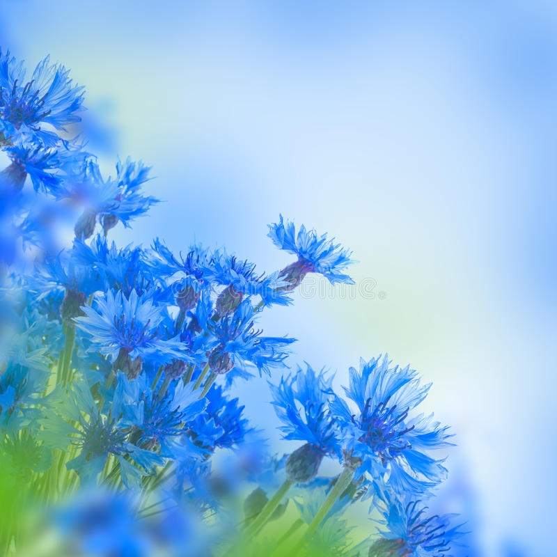 Lösa blåa blåklinter royaltyfri fotografi