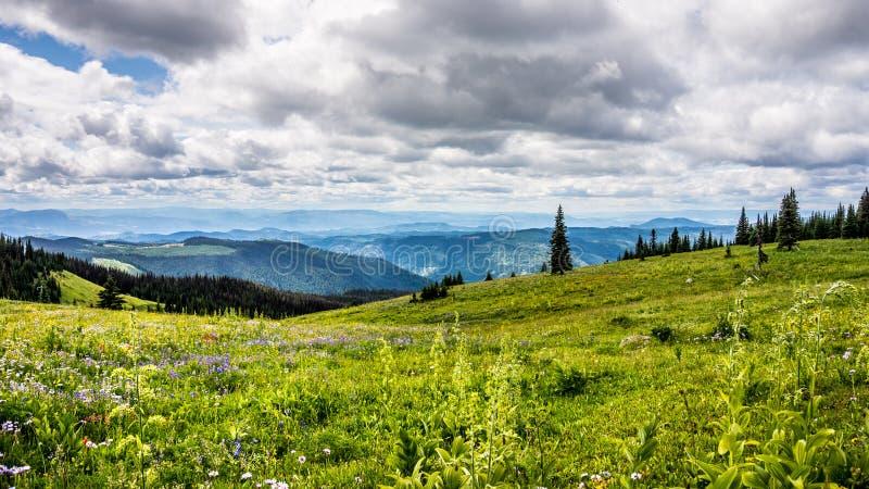 Lösa blommor i det höga alpint under en trevlig himmel royaltyfri foto