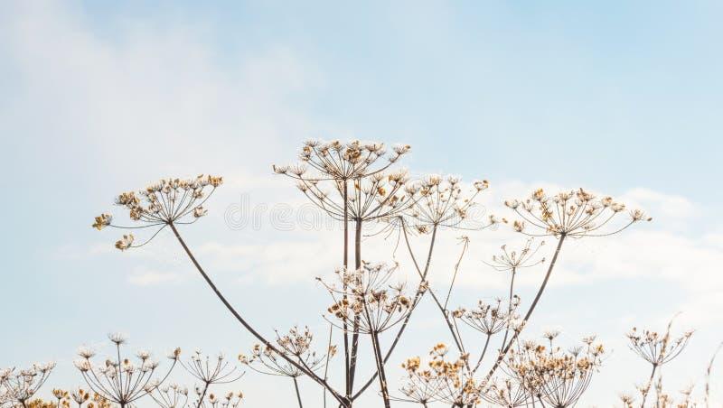 Lösa blommor i ljuset av soluppgång arkivbilder