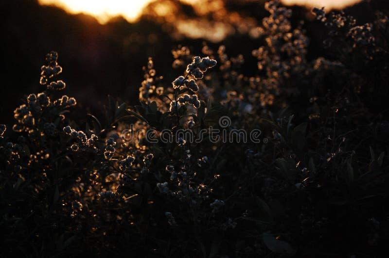Lösa blommor nära tabellberget, Sydafrika, Cape Town arkivfoton