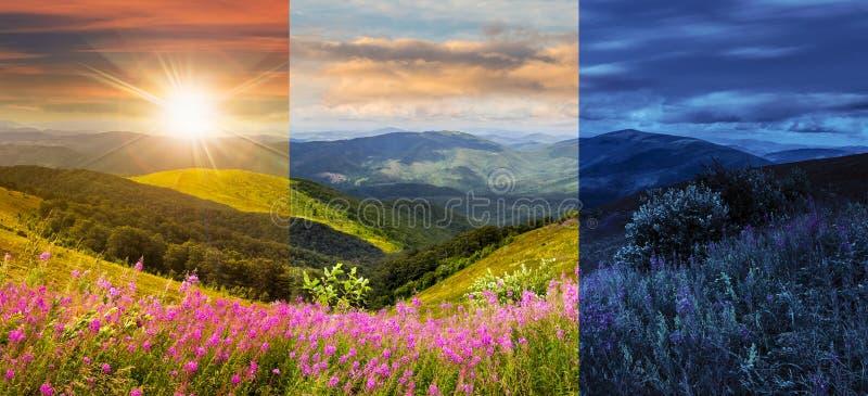 Lösa blommor på bergöverkanten arkivfoto