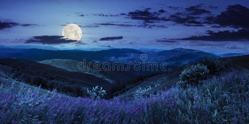 Lösa blommor på bergöverkanten på natten fotografering för bildbyråer