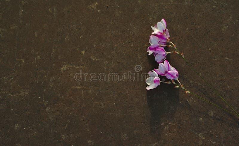 Lösa blommor på den vanliga gravstenen royaltyfri foto
