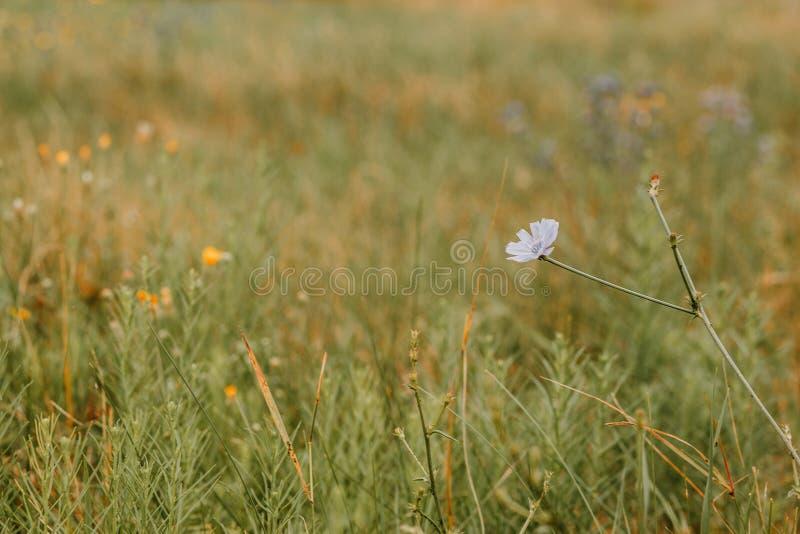 Lösa blommor på en bakgrund arkivfoto