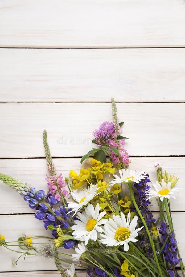 Lösa blommor på vit trälupine D för däckbakgrundskamomill arkivbild