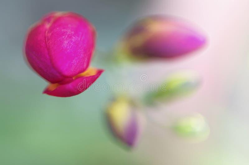 Lösa blommor stänger sig upp, med oskarp abstrakt bakgrund arkivfoton