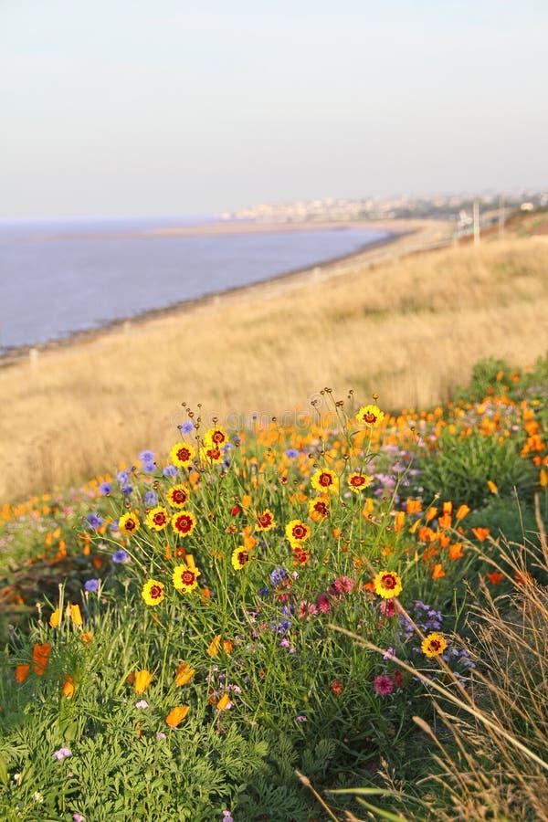 Lösa blommor vid kustlinjen royaltyfria bilder