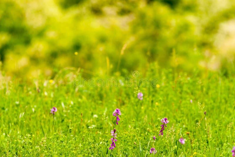 Lösa härliga blommor i det grunda djupet för äng av fältet arkivbild