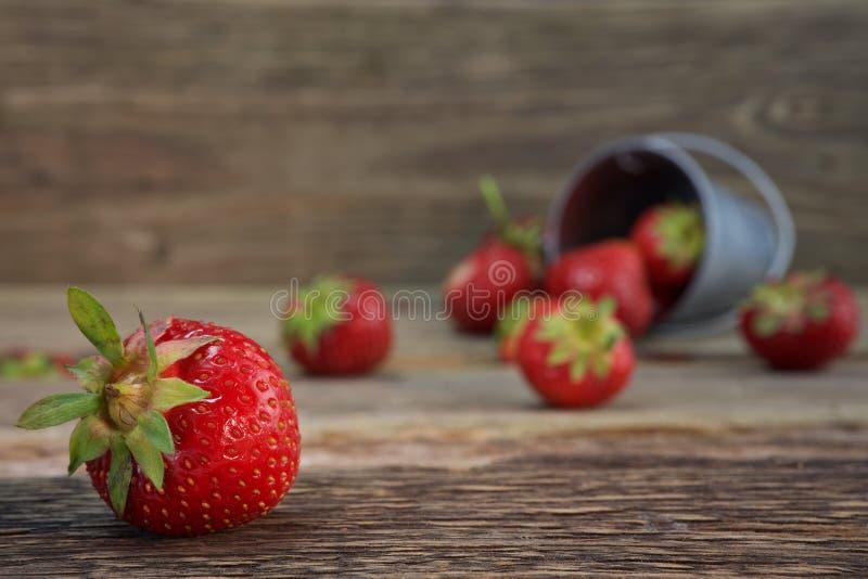 Lösa jordgubbar i en liten metallhink royaltyfri bild