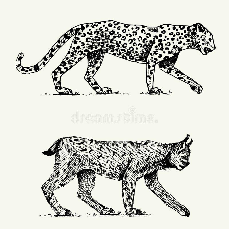 Lösa katter ställer in, leoparden, och lodjuret inristade handen som dras i gammalt, skissar stil, tappningdjur stock illustrationer
