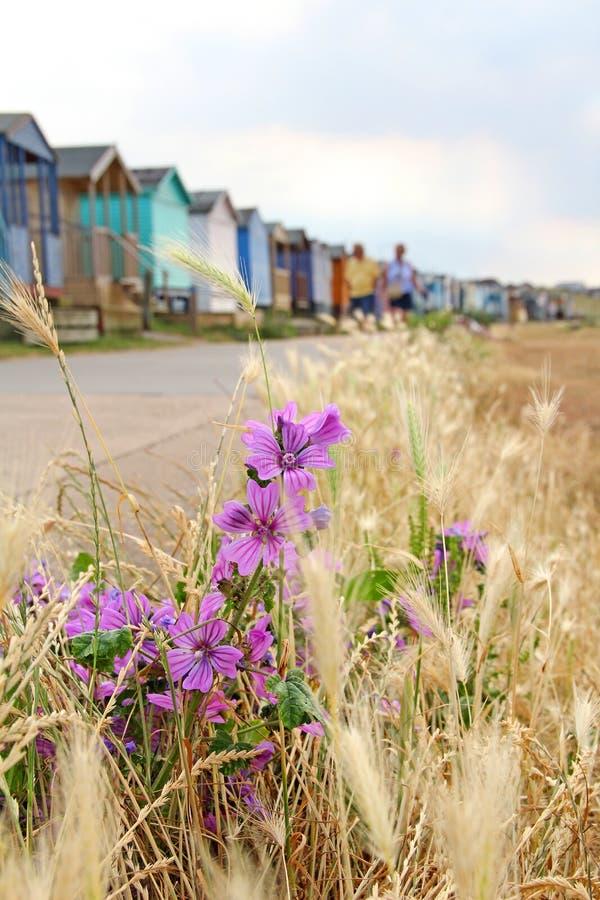 Lösa kust- blommor och strandkojor royaltyfria bilder