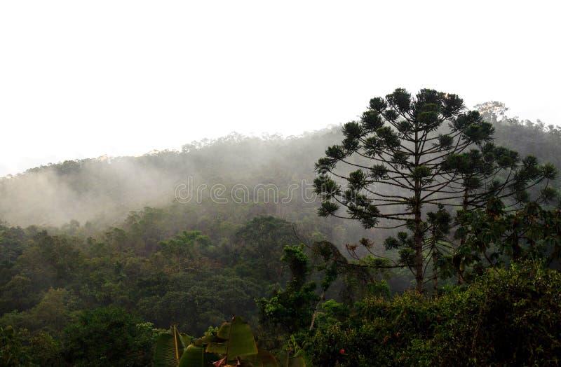 Lösa Parana sörjer skogsmarkskogen som döljas i låga moln och dimma royaltyfria bilder