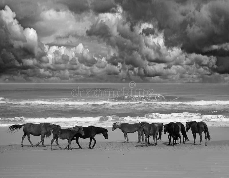 Lösa strandhästar fotografering för bildbyråer