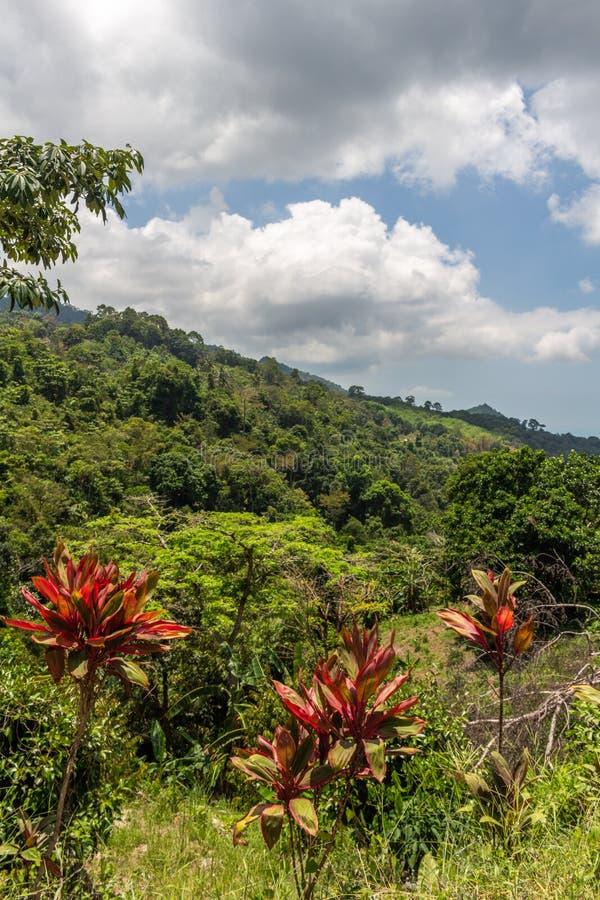 Lösa träd Thailand för Koh Samui djungel arkivfoto