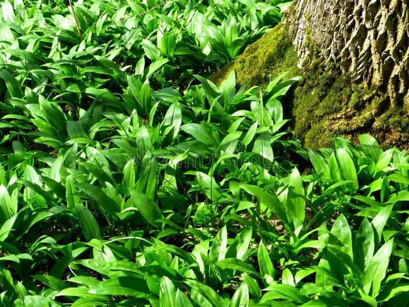Lösa växter och mossigt träd royaltyfri fotografi