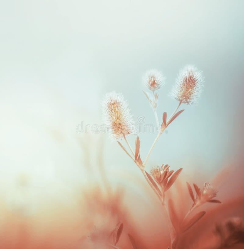 Lösa växter på dimmig himmel för morgon Utomhus- naturbakgrund Pastellfärgad färg fotografering för bildbyråer