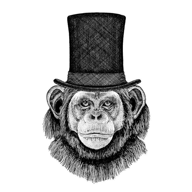 Löst djur som bär den bästa hatten, cylinder Hipsterschimpans, apa, stock illustrationer