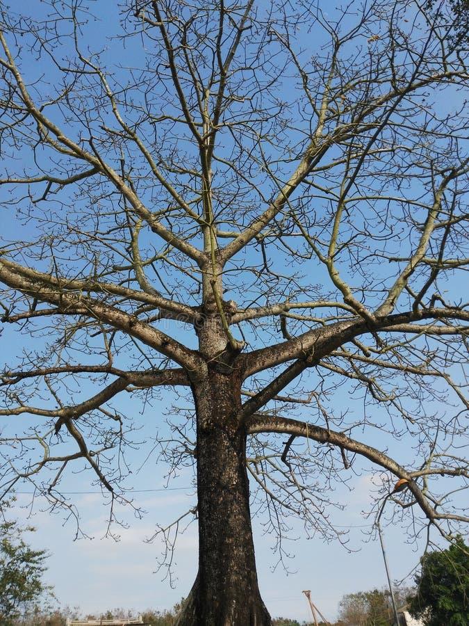 Löst gammalt träd royaltyfri fotografi